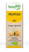 Herbalgem Propolis large spectre Solution buvable bio Fl cpte-gttes/15ml à Saint-Maximim